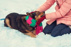 Woman tying a scarf on a dog in cold winter